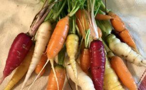 carrots, bunch