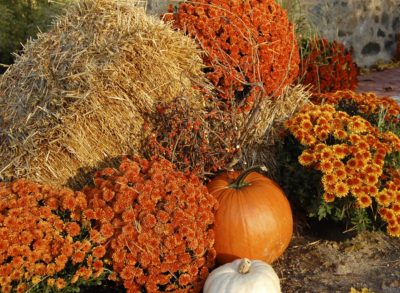 fall, pumpkin, hay flowers, orange